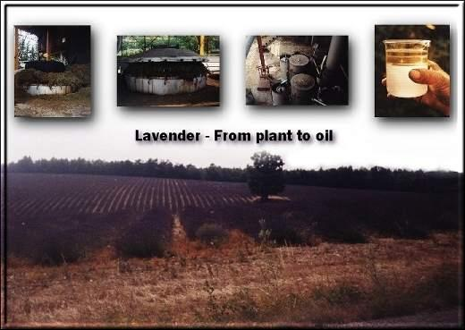lavender oil presentation