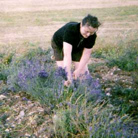 me harvesting the lavender
