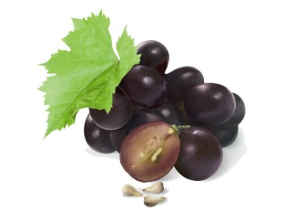 logo design grape seed oil